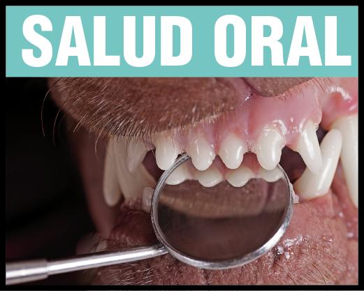 Salud Oral Maray