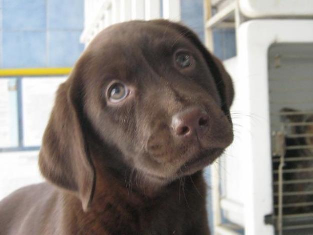 Consejos para la nueva mascota canina