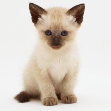 Consejos para la nueva mascota felina