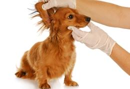 8 Pasos para un buen baño a la mascota con problemas de piel